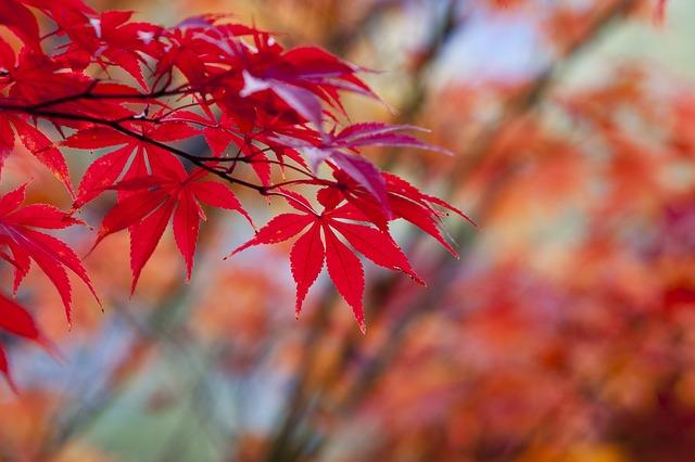 紅葉の箕面で食べるもみじの天ぷらって?おすすめの4種類を食べてみた